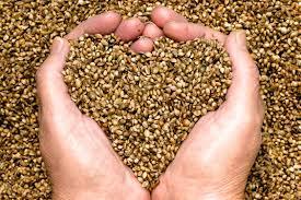 Scambiare semi tra agricoltori