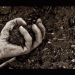 mano nella terra