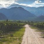 viti etichetta vino sostenibile