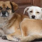 Cani barbaramente uccisi in Italia
