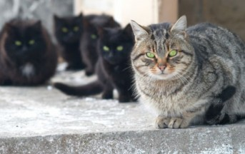 Torino, il Comune assolda i gatti randagi per sondare l'inquinamento cittadino