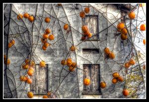 albero frutta zona dismessa