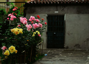 casa con rose