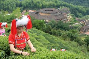 coltivazioni di tè in Cina