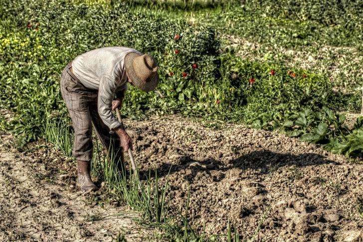 contadino orto
