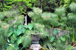giardino vegetazione