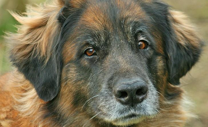 Sid il cane usato per gli esperimenti di un veterinario for Piani casa cane trotto