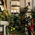 orto urbano parco ecologico Salerno