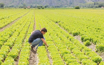 """La legge """"Campolibero"""" approvata: nuove opportunità di lavoro per i giovani nell'agricoltura"""