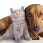 Cani e gatti considerati cose