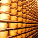 sequestrate forme di Parmigiano Reggiano aflatossina