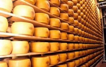 Latte contaminato da Aflatossina: forme di Parmigiano Reggiano sequestrate, 4 persone arrestate