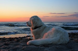 Spiagge aperte ai cani