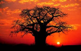 Baobab: l'elisir naturale della giovinezza