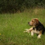 cane fedele al padrone morto maltrattementi