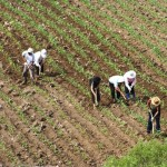 contadini rapporto agromafie Cgil