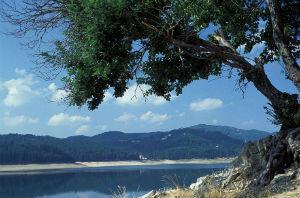parco nazionale della sila patrimonio unesco