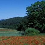motivi per visitare il parco nazionale della sila