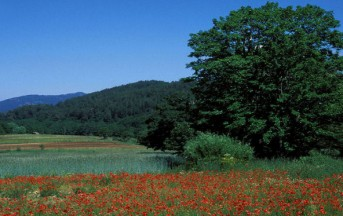 Parco Nazionale della Sila: 5 buoni motivi per visitare il nuovo riconoscimento Unesco