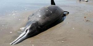 liberata balena dopo 30 ore