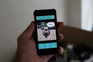 BarkCam App foto cani