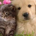 Cani e Gatti poteri paranormali