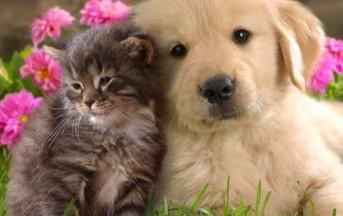 """Lo studio: cani e gatti paranormali, """"sentono"""" il dolore del padrone"""