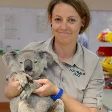 koala supereroe