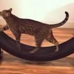 gatti movimento ruota