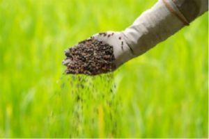 fertilizzanti_matrina naturale ma tossica