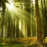 lasciare città per vivere nella foresta