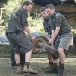 Hugo, tartaruga gigante di 166 kg Australia