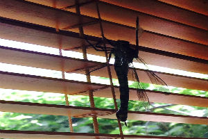 libellule giganti in Gran Bretagna, insetti giurassici di 20 cm