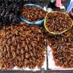 diventare intelligenti con insetti