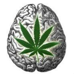 marijuana e alzheimer
