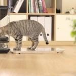 Bistro per gatti obesi