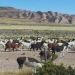 3 italiani morti incidente bus Bolivia franco cedram,