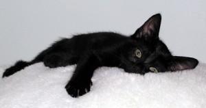 Gatti neri abbandonati in Gran Bretagna