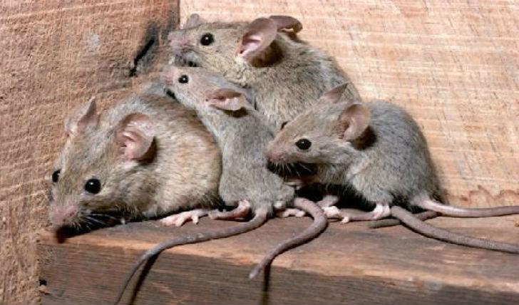 ratti rischia sfratto