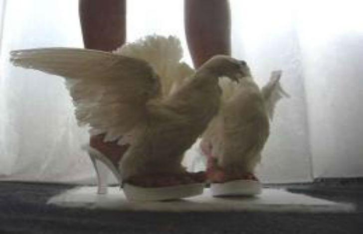 anteprima di nuove immagini di negozio online Moda dell'assurdo: Iris Schieferstein, carcasse di animali ...