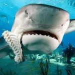 squalo selfie sardegna acque