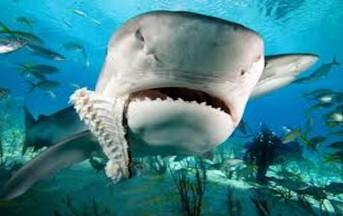 Australia, surfista 17enne uccisa da uno squalo: la testimonianza del padre