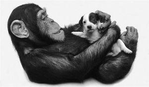 adozioni tra specie diverse