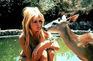 bambi e bardot brigitte