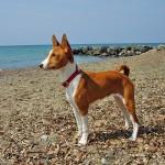 San Benedetto cane salva bambino