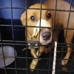 20enni denunciati cucciolo di meticcio maltrattato