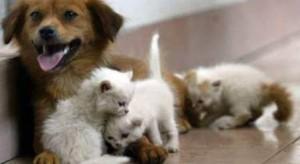 cani e gatti da adottare