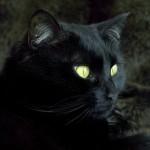 gattoi neri boom di abbandoni