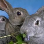 Sagra coniglio a Trento animalisti protestano