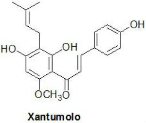 Xantumolo proprietà: a cosa servono i flavonoidi?
